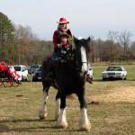 HorseParade10