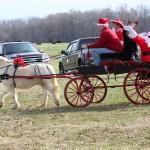 HorseParade12