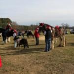 HorseParade13