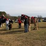 HorseParade14
