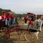 HorseParade15