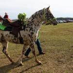 HorseParade16