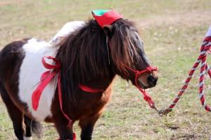 HorseParade19