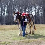 HorseParade21