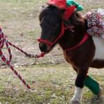 HorseParade24