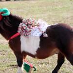 HorseParade25
