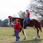 HorseParade28