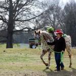HorseParade30
