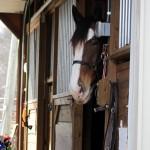 HorseParade35