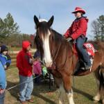 HorseParade4