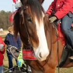 HorseParade5