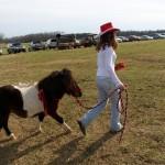 HorseParade6